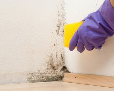 Kill mold - 51 Extraordinary Everyday Uses for Hydrogen Peroxide