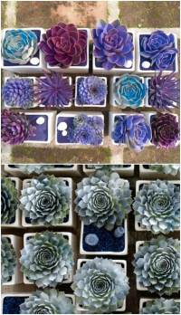 15 Easy DIY Backyard Succulent Garden Ideas  chuckiesblog
