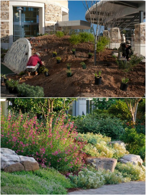 gorgeous and easy diy rock gardens