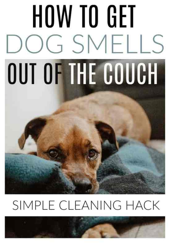 get dog smells out of the couch