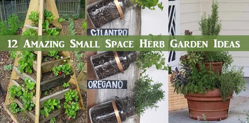 12 Amazing Small Space Herb Garden Ideas – DIY Scoop