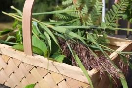 Pressa växter