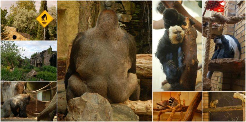 zoo w Opolu małpy