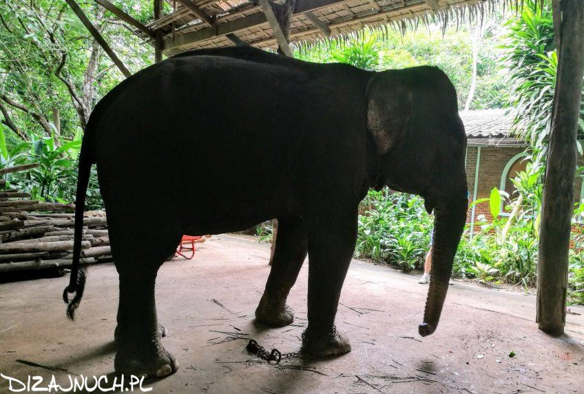 czego nie oglądać w Tajlandii