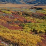 Tundra color, Yukon