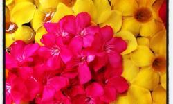 fiori_thailandesi