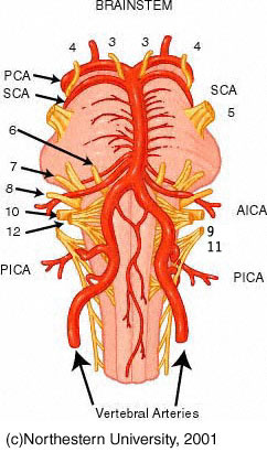 Chiropractic Vertigo