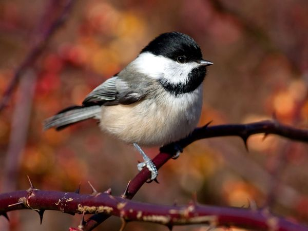 75 Beautiful Birds Photography for Inspiration 25