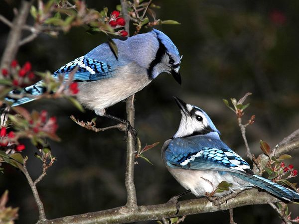 75 Beautiful Birds Photography for Inspiration 56