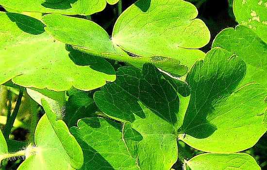 25 Most Useful Free High Resolution Leaf Textures 18