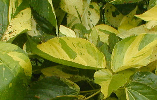 25 Most Useful Free High Resolution Leaf Textures 2