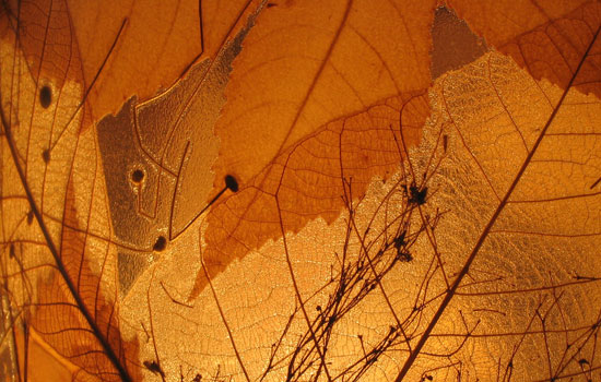 25 Most Useful Free High Resolution Leaf Textures 9