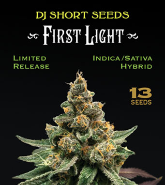 Home | DJ Short Seeds