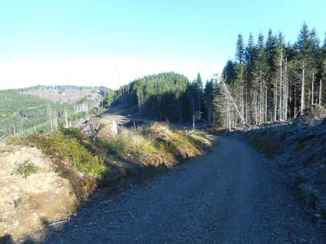 Ugly Detour and Clear-Cut Section
