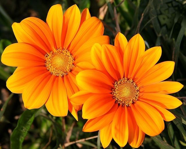 Twee gelijke bloemen