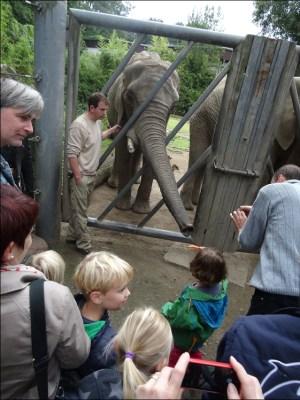 Der Zoospaziergang war vor allem für die Kinder ein Erlebnis: Sie durften die Tiere streicheln und füttern. Foto: Petra Grünendahl.