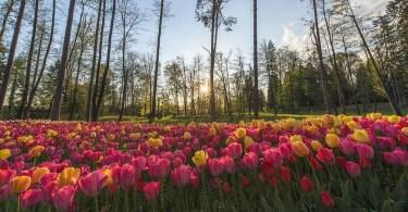 أجمل حدائق مدينة ليوبليانا