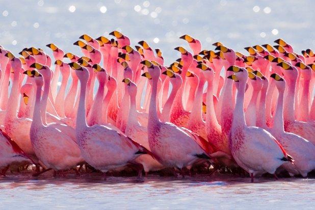 حديقة جنة الطيور