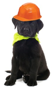 black-puppy_construction-hat1