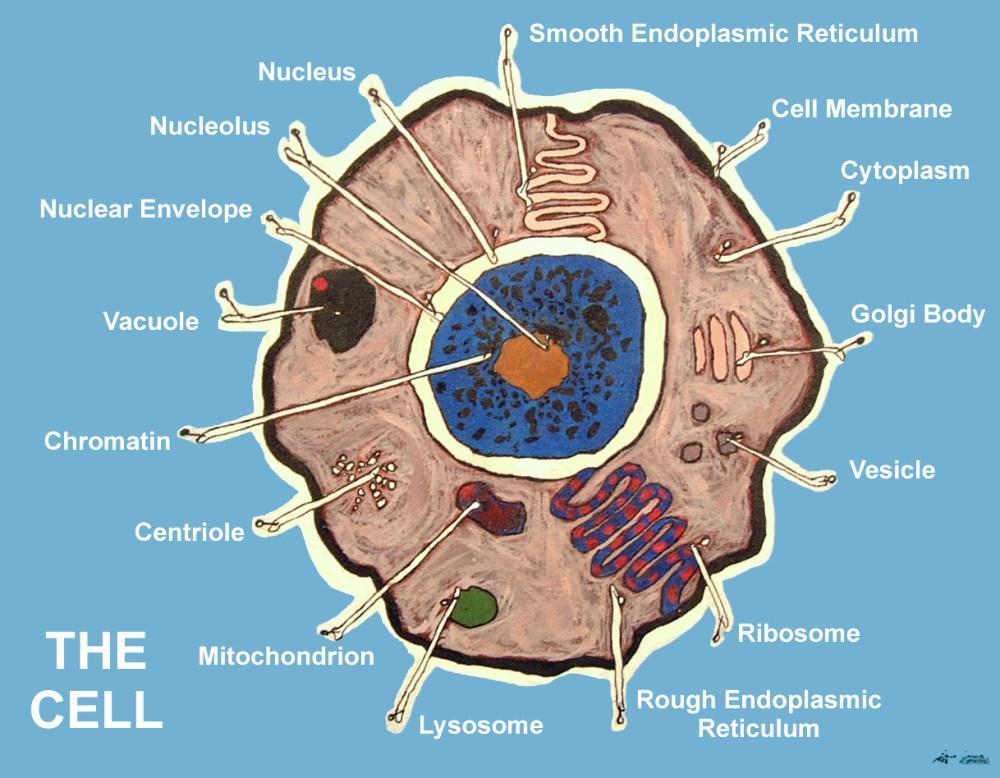 medium resolution of the cell jpg 1218x948