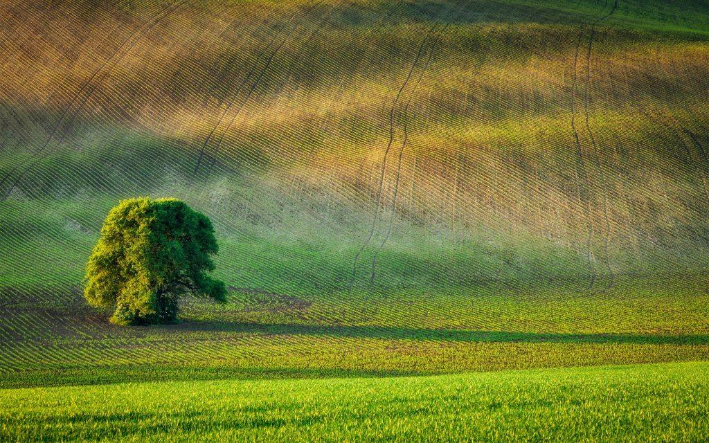 Árbol solo en campo arado