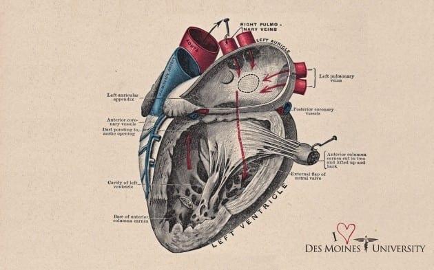 I Heart DMU