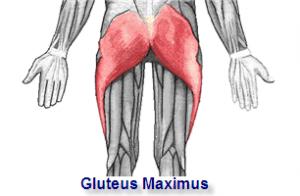 gluteus-maximus-300x196