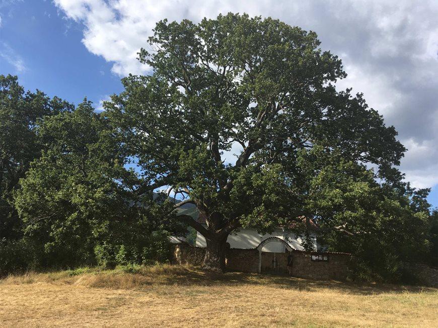 дърво на годината