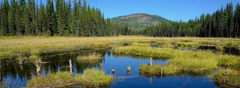 Wetland and Riparian Vegetation Types  WA  DNR