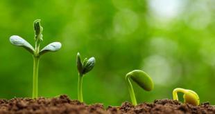 زاد الدعاة - العوامل الثلاثة لنجاح الإنبات