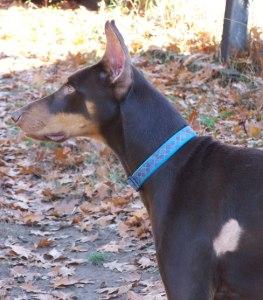 Sammy-10-2012-4