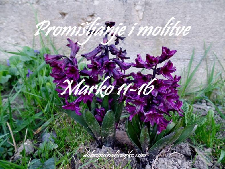 slika za blog - Marko - 11- 16
