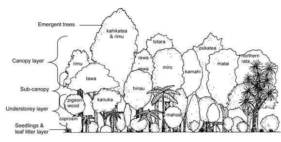 Bush layers: Understanding the bush