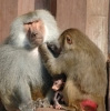 monkey-family_1.jpg