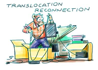 Translocation reconnection