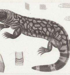 science diagram of lizard [ 1200 x 884 Pixel ]