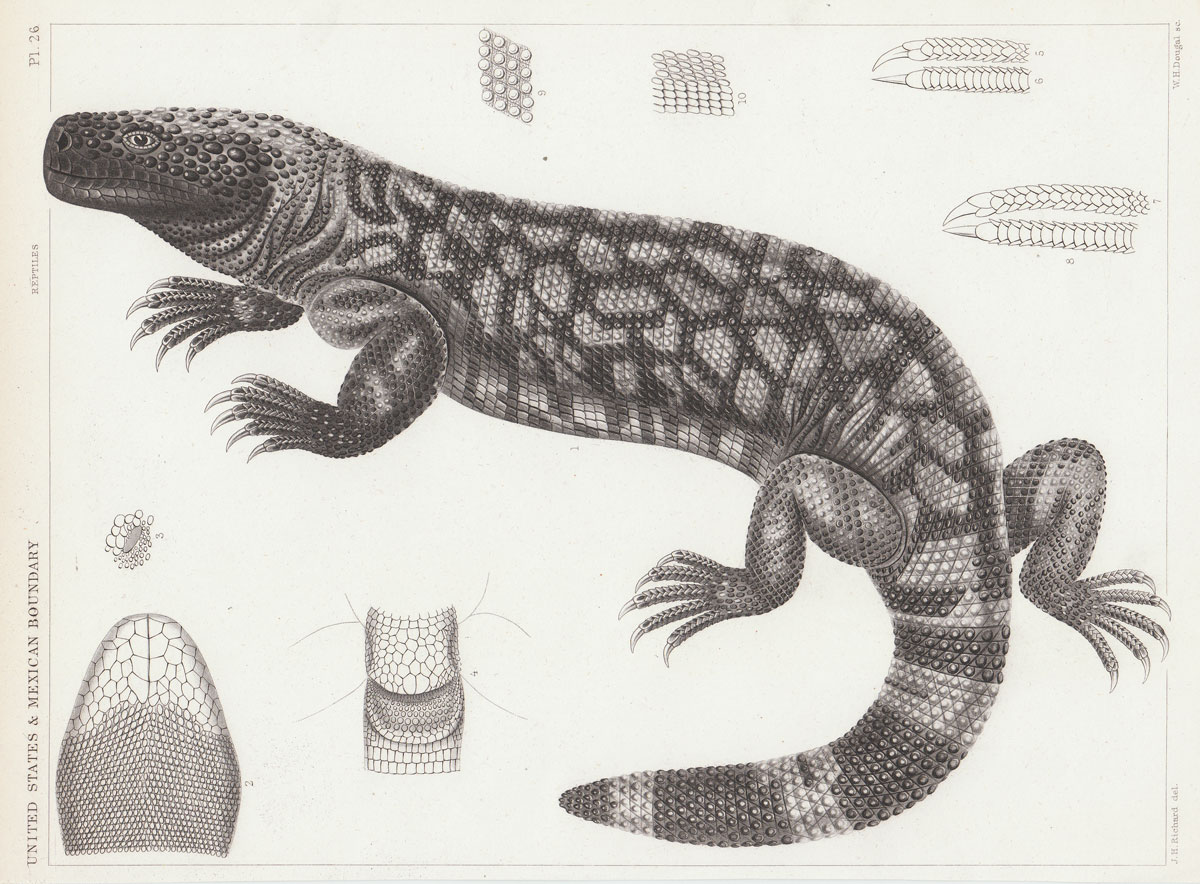 hight resolution of science diagram of lizard