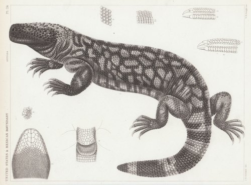 small resolution of science diagram of lizard