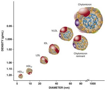 VLDL - The Role of Triglyceride-Rich Lipoproteins and Remnant Cholesterol