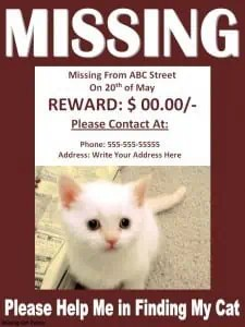 Missing Cat Poster Template  Missing Reward Poster Template