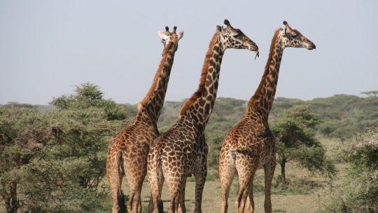 La Tanzanie, un pays merveilleux en Afrique