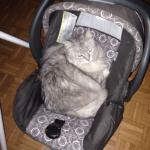 תולה (חתולה מתפנקת)