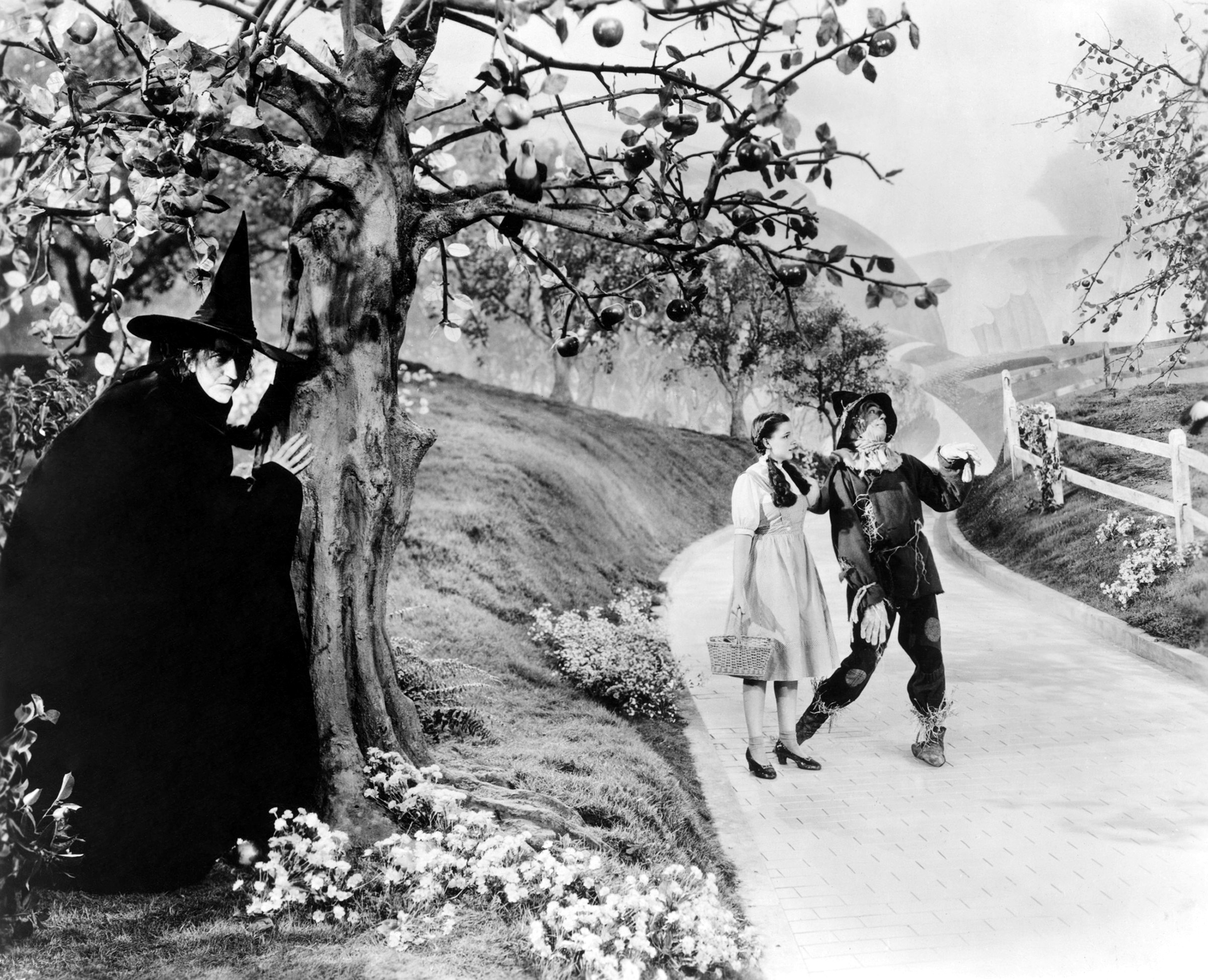 Black And White Tree Wallpaper Once Upon A Time Wizard Of Oz The 1939