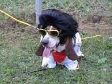 Perro disfrazado de Elvis