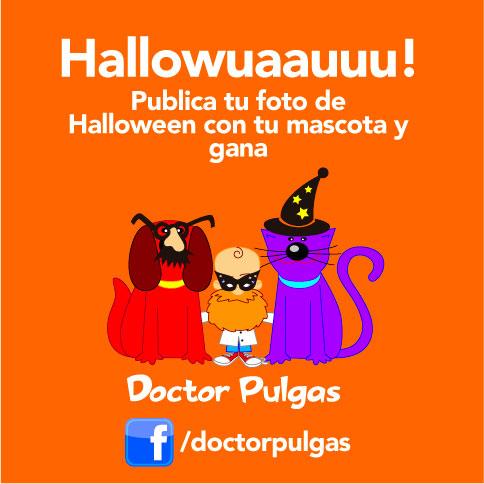 Concurso de disfraces de mascotas en Doctor Pulgas