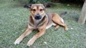 Perro para adopción en Rionegro