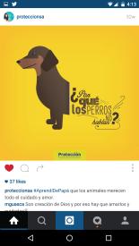 Publicidad de Protección sobre amor a las mascotas