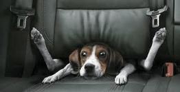Los mareos y el vómito son de las peores pesadillas para nuestro canino y para nosotros como amos Foto: foyel.com