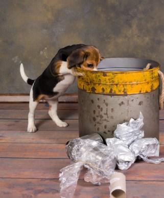 Es importante cubrir bien los basureros de la cocina y ponerlos fuera del alcance del pequeño aventurero, así evitarás que trague restos de alimento descompuesto, huesos, papel aluminio o plástico adhesivo ya usados. Foto: misanimales.com