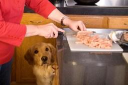 No cocines con el cachorro a tus pies. Foto: misanimales.com